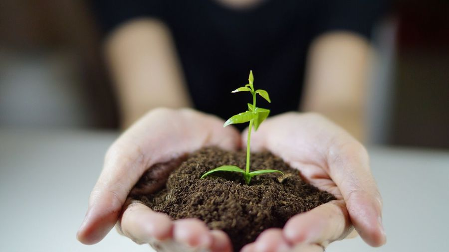 Human Hand Focus On Foreground One Person Plant Holding Human Body Part Real People Unrecognizable Person Growth Close-up Animal Themes Leaf Green Color Fragility Nature Day Indoors