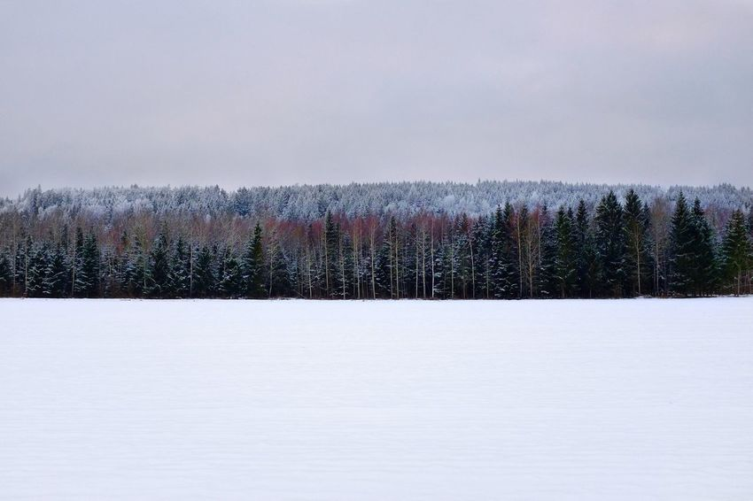 Tree-line. Omberg, Sweden. Emptiness Lines Winter Snow Cold Temperature Nature Tree Tranquility Tranquil Scene Beauty In Nature Scenics Landscape No People Outdoors Forest Sky