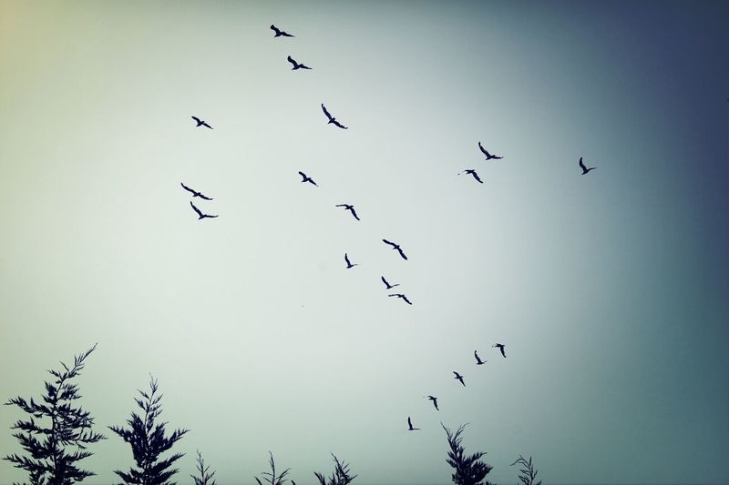 Animals Birds Sky