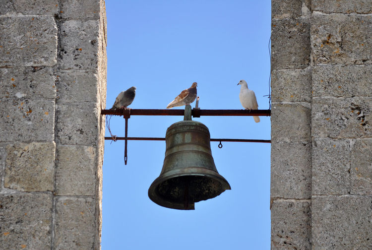 Low angle view of pigeons perching on street light