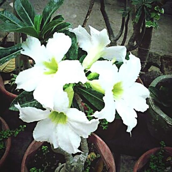 Blossom White Flowers Flower Plants And Flowers Plants 🌱 Check This Out Taking Photos Hello World Planet Earth