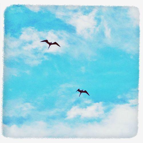 Siluetas al vuelo Soaring Birds