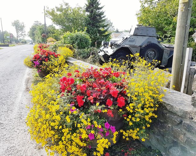 Strength behind beauty Flower Growth Nature Freshness No People Red Fragility Beauty In Nature Outdoors Day Close-up Tree Flower Head Sky Armored Vehicle Armor Armoured Vehicle Armoured Vehicles Army Army Vehicle Army Vehicles Garden Centre Garden Center Flowers Flower Pots