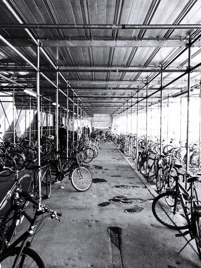 Park And Ride  Cycling Healthy Lifestyle Storage Parked Bicycles Velopark Bicycle Mode Of Transportation