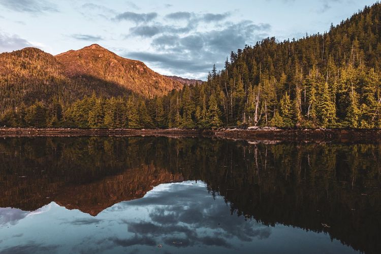 Alaska Bay Water Reflection Beauty In Nature Scenics - Nature Tree Tranquility Sky Mountain Tranquil Scene No People Nature Cloud - Sky Environment Idyllic Outdoors Non-urban Scene