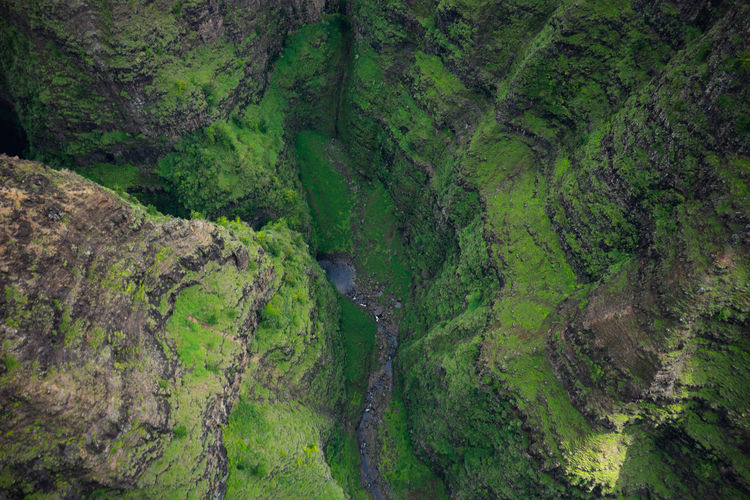 Green Color Beauty In Nature Scenics - Nature Plant Tranquility Tranquil Scene Environment No People Non-urban Scene Land Day Water Nature Landscape High Angle View Aerial View Lush Foliage Growth Outdoors WoodLand Flowing Water Rainforest Hawaii Travel EyeEmNewHere