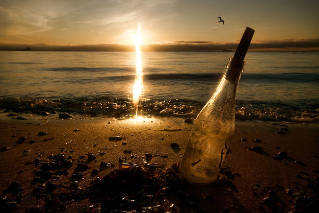Lost art of communication Concept Bottle Message Message In A Bottle Gull Bird Sand Seaweed Golden Coast Raä Skåne Sweden Sunset Sea Water Horizon Over Water Beach No People Sunlight Beauty In Nature Scenics