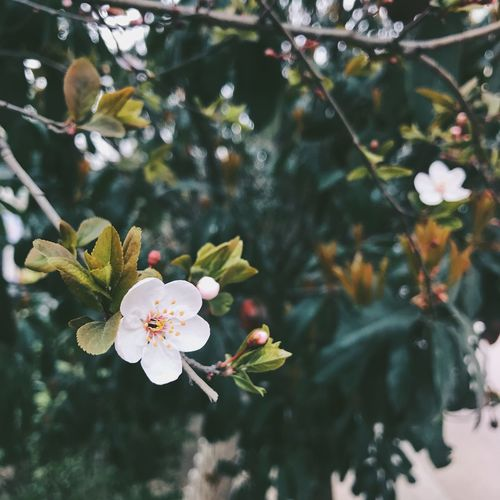 EyeEmNewHere Day Flower Nature Beauty In Nature Growth Fragility Freshness Petal Tree Close-up Flower Head Blossom Twig Outdoors No People Branch Plum Blossom