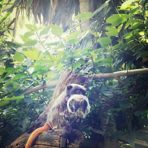 Animals Zoo Emperor Tamarin