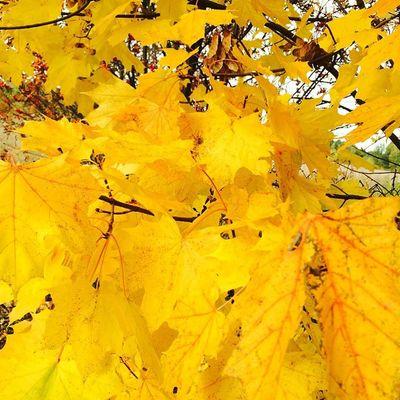 Autumn Таруса