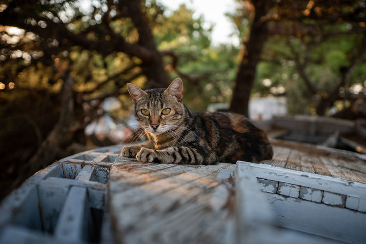 Portrait of cat relaxing on wooden boat