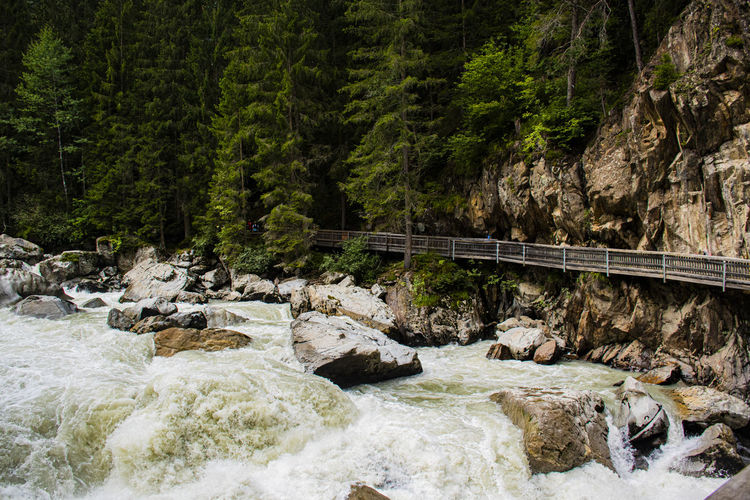 Bridge over river stream in forest