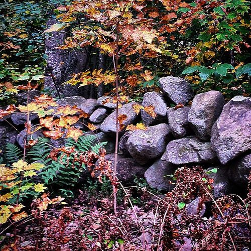 Nothing special. Just a rock wall. Rocks Rockwall Nature Wall AutumnInNH