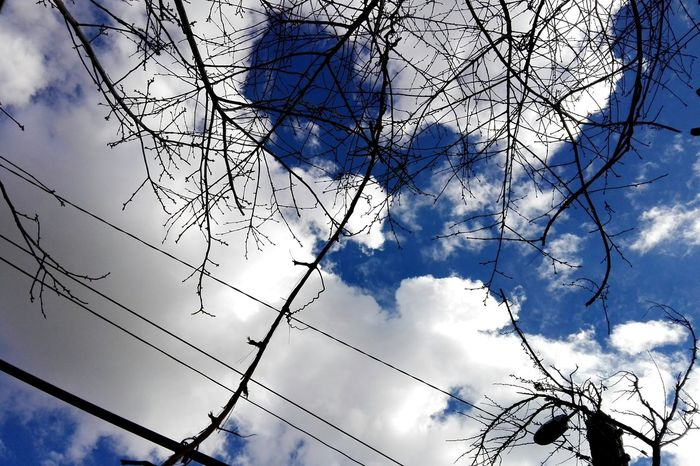 Sky Bare Tree Cloud - Sky Low Angle View No People Tree Branch Outdoors Nature Showcase: March @WOLFZUACHiV Edited By @wolfzuachis Huaweiphotography On Market Wolfzuachiv Eyeem Market Showcase: 2017 Veronicaionita Ionitaveronica Branches And Sky Tree Branches