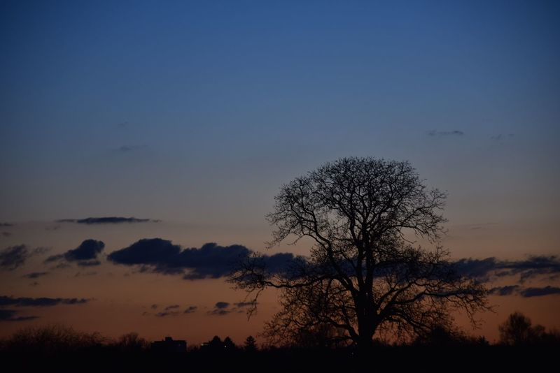 Beauty In Nature Beauty In Nature Clouds Clouds And Sky Colour Of Life Eyem Best Shots Fragility Nature No People Outdoors Silhouette Sky Sunset Sunset_collection Tree
