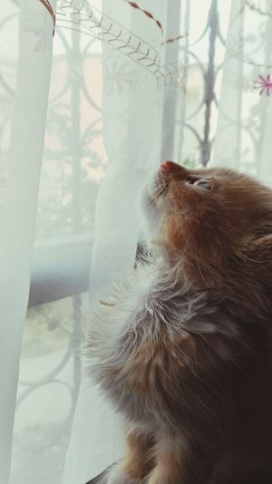 Close-up of cat by window at home
