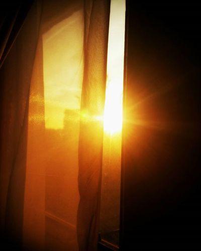 Golden Morning (Day 13 of 366) Sunshine Sunrise Morning Aviary London Nickblak