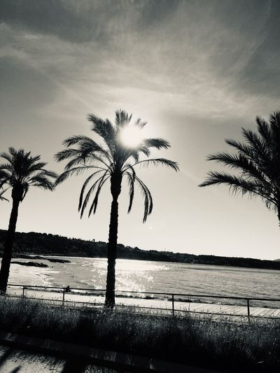 🌴🌊🌞 Monochrome Sun Beachphotography Sea Beach Palm Tree Sky Water Beauty In Nature Plant Tree Nature Scenics - Nature Tranquility Tranquil Scene Cloud - Sky No People Sea Silhouette Beach Growth Outdoors Land Non-urban Scene Sunset