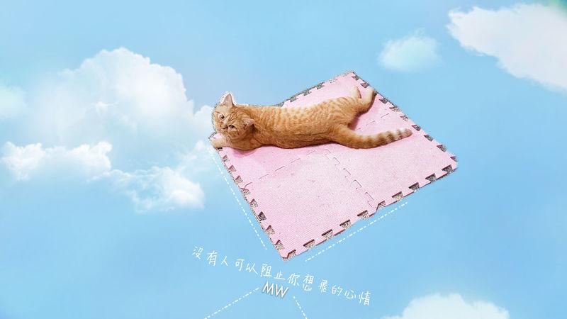 沒有人可以阻止你想飛的心情~ 翻轉視界 喵星人 Catboy Wish 猫 Focus Thinking Day No People Sky