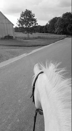 Horses Horse Horizont  Paysages Go For A Walk Balade FiftyShadesOfGrey
