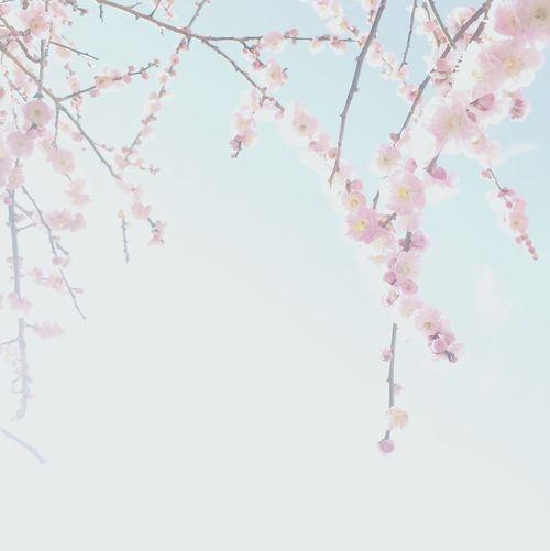 桃か梅😁 Showcase