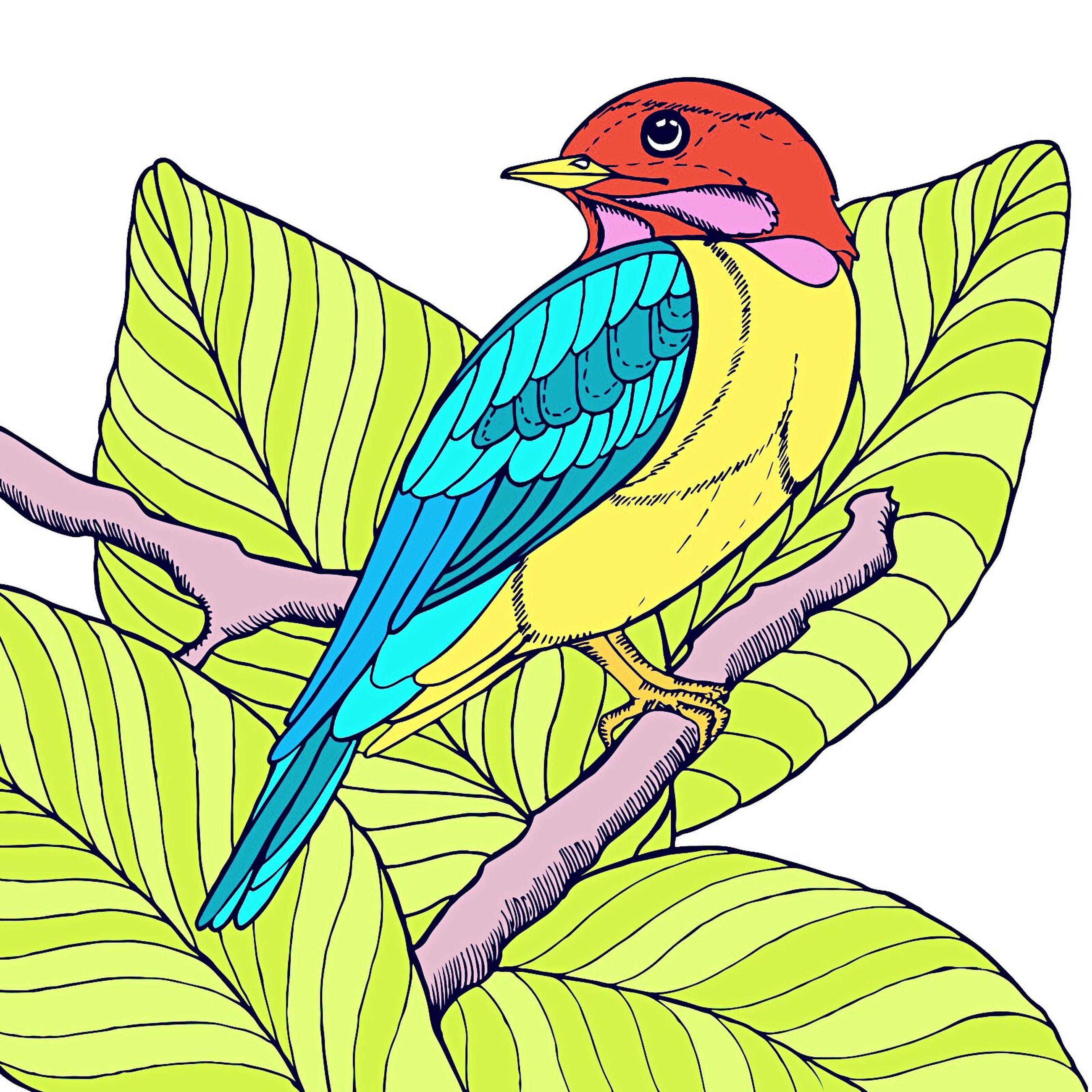 bird, animal, one animal, outdoors, parrot, no people, chameleon
