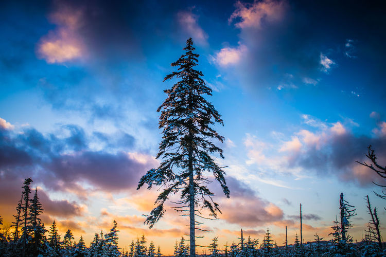 Vibrant HDR sky Tree Sky Sunset Nature Landscape Dusk Cloud - Sky Blue Outdoors Forest No People Beauty In Nature Newfoundland NLWX Photography Cold Temperature Winter Snow St. John's, NL Nature Beauty In Nature Multi Colored East Coast Tree