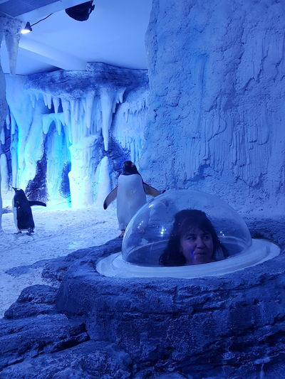 Me and penguins love at first sight @aquarium London
