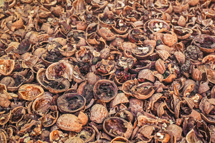 Cracked nuts infected with mold Bad Condition Mold Nuts Abundance Backgrounds Bad Close-up Corupted Cracked Day Decayed Defaced Dried Food Food Food And Drink Freshness Full Frame Healthy Eating Indoors  Infected Large Group Of Objects Mildew Mold Food Mold Mould Mouldy Nature No People Nuts And Seeds Nuts On The Ground Nutshell Putrid Rotten