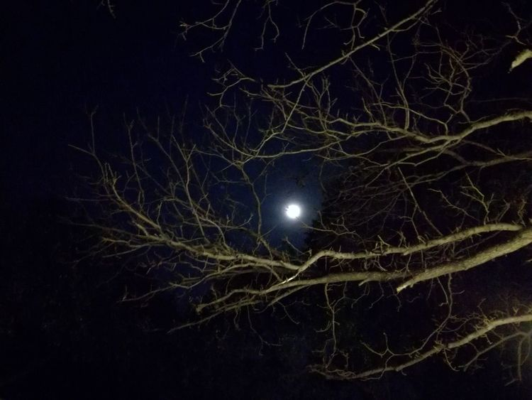 Night Monterrey Moon Moonlight Moon Night Sky Moon Night Astronomy Moonlight Space Outdoors Illuminated Nature Bare Tree No People Beauty In Nature Tree Sky