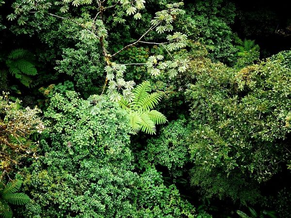 Nature Harmony Forest No People Pure Nature Tropical Paradise Plant Green Color Costa Rica Jungle Tropical Climate Over The Trees