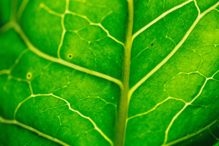 Green Macro Photography Nature Nature Photography Textures and Surfaces Leaves Leaves_collection Naturelovers Texture