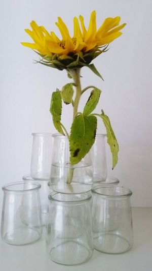 Flower Vase No People Indoors  Jar Fragility Nature Flower Head Herbal Medicine Close-up Water Beauty In Nature Perfume Freshness Day