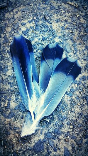 Feathers Imagination during Morning Running