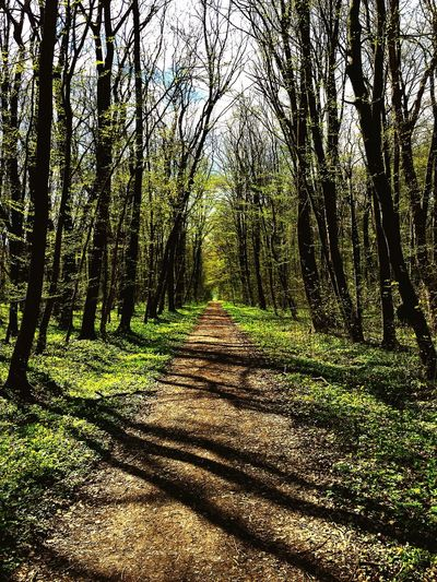 Forrest Path Trees Shadow Light And Shadow Walking Around Nature EyeEm Nature Lover Spring Spring Into Spring