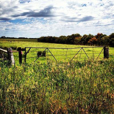 #justgates #bellarine #railtrail #myhometown #sunshine Sunshine Justgates Railtrail Myhometown Bellarine