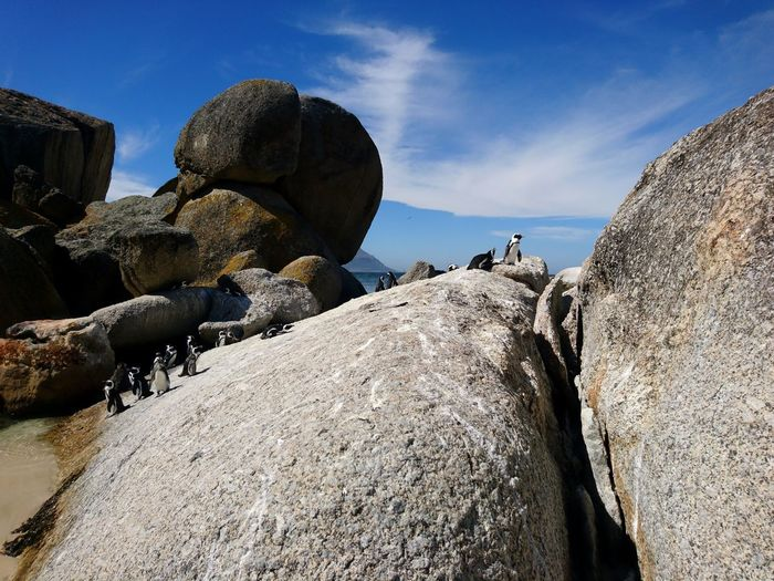 Penguins Penguin Boulders Beach Cape Town South Africa Nature Animal Themes Animals In The Wild Beach Beauty In Nature Blue Sky Travel Destinations