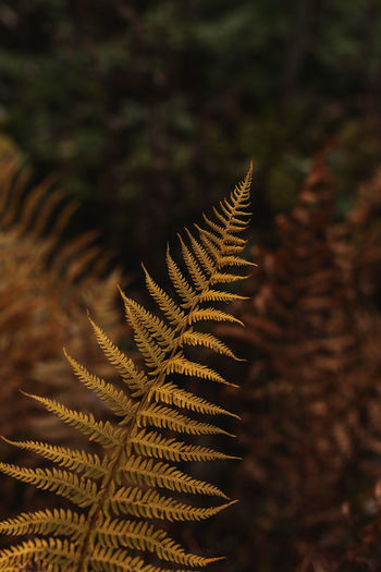 Yellow fern. autumn botanical natural background. close up