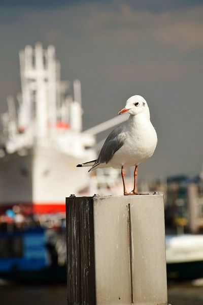 Nature Beauty In Nature Sunlight Sunshine Outdoors Focus On Foreground One Bird On Focus Gulls And Sky Animal Wildlife Animals In The Wild Silhouette River Elbe ❤ Bird Perching Harbor Water Animal Themes Close-up Sea Bird
