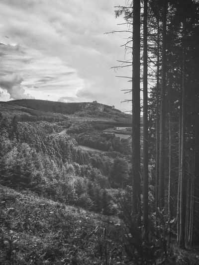 View from the Rothaarsteig on the Bruchhausener stones monochrome Bruchhausener Steine Nature Photography Rothaarsteig Sauerland Trees View Beatiful Nature Black And White Clouds Day first eyeem photo Forest Forest Photography Landscape Landscape Long Monochrome Mountain Nature No People Outdoors Rocks Sky Structures Summer