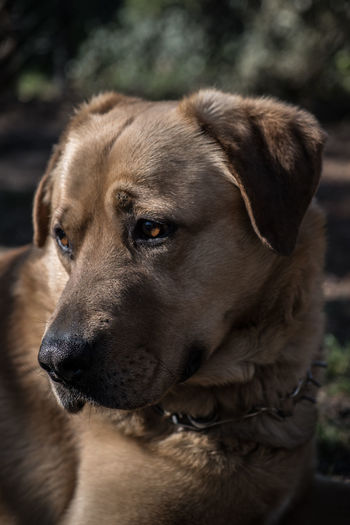 Dog Canine One Animal Pets Domestic Animal Themes Domestic Animals Animal Mammal Close-up Looking Focus On Foreground No People Animal Head  Looking Away Day Vertebrate