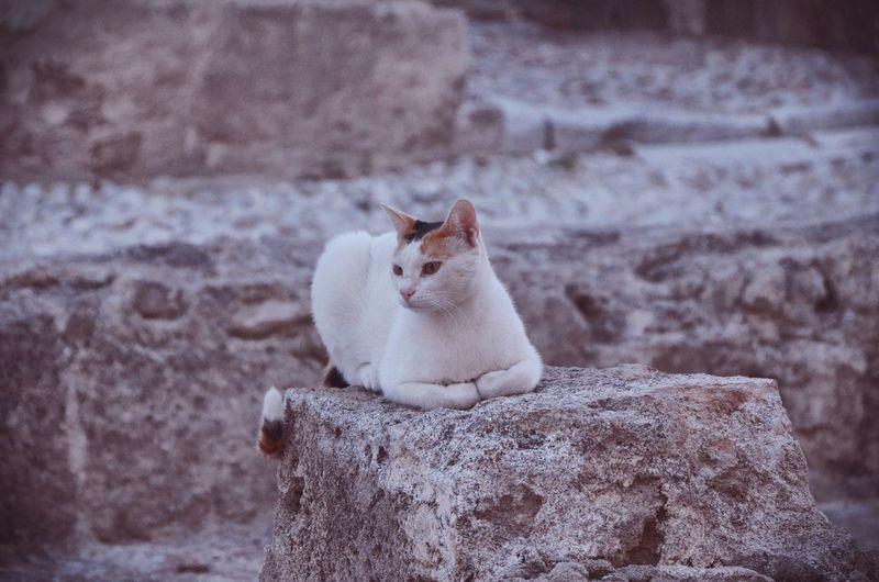 Animals Pets Domestic Cat Animal Themes Feline Athens, Greece