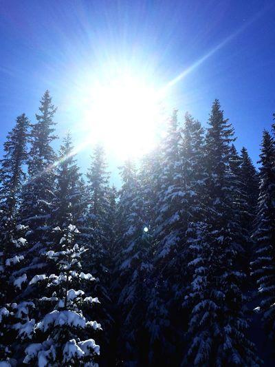 Amazing day. Enjoying The Sun Holiday Enjoying Life Taking Photos Winter