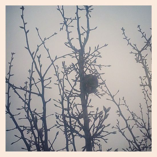Little bird's nest on a leafless winter tree.