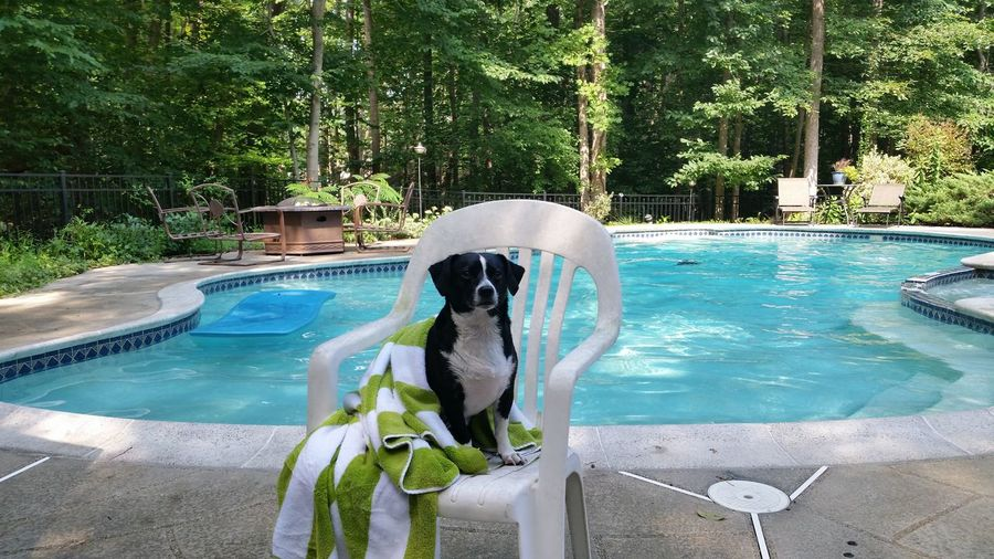 Sommergefühle Water Swimming Pool Day Outdoors Swimming Nature No People Animal Themes EyeEm Selects One Animal Let's Go. Together. Dogslife Dog Of The Day Wine Not Breathing Space Pet Portraits Connected By Travel Summer Exploratorium The Photojournalist - 2018 EyeEm Awards Summer In The City
