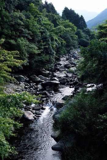 涼。 豊前 秋探し 涼 川