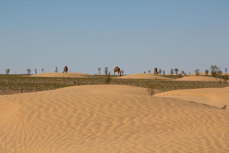 People on sandy beach
