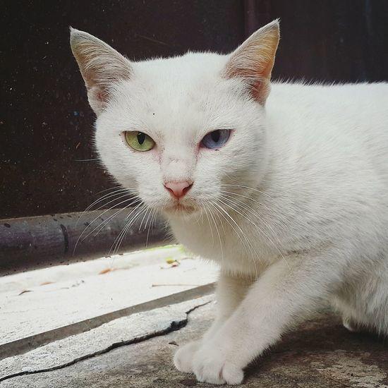 Cat My Cat I Love My Cat Samsung Galaxy S4 Cat Lovers I Love Cats แมว