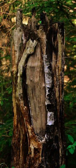 Nature Art Photography Woods Tree Tree Trunk Close-up Bark