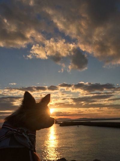 Sunset Sky Nature Cloud - Sky One Person Water Beauty In Nature Real People Sun Scenics Lifestyles Sea Chihuahua Niko Family 2yearsold  Make You Coffee Domestic Cat Outdoors Women Horizon Over Water Mammal Day People